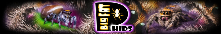 BigFATPhids.com is your place to go for all sorts of Jumping Spider Fun, Spider Condos, Decor and Apparel