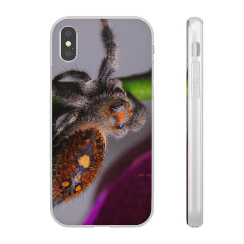 Fun Cases with Jumping Spider images printed on them