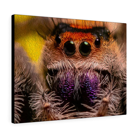 Canvas Gallery Wrap Featuring P. regius Jumping Spider Scene