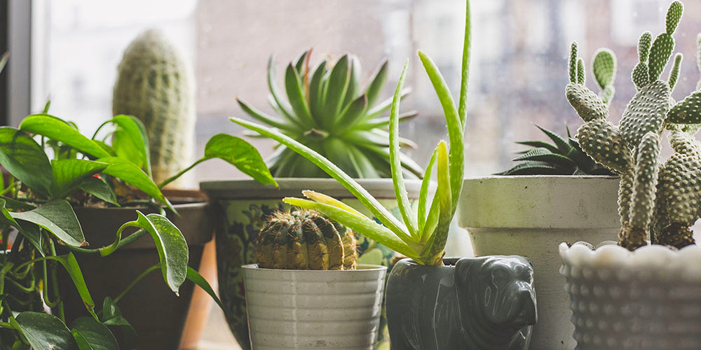 Picking plants for your office
