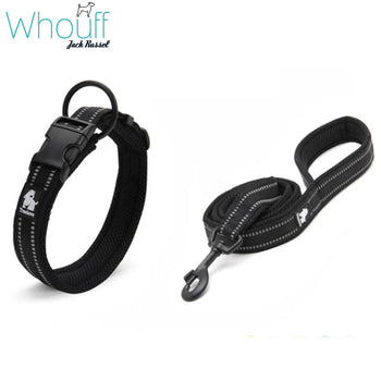 Easy On Dog Collar And Leash Set