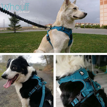 Reflective No-Pull Dog Harness