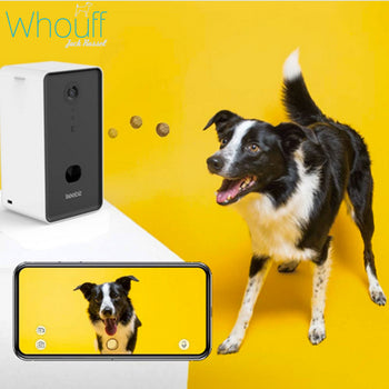 Dog Camera & Treat Dispenser