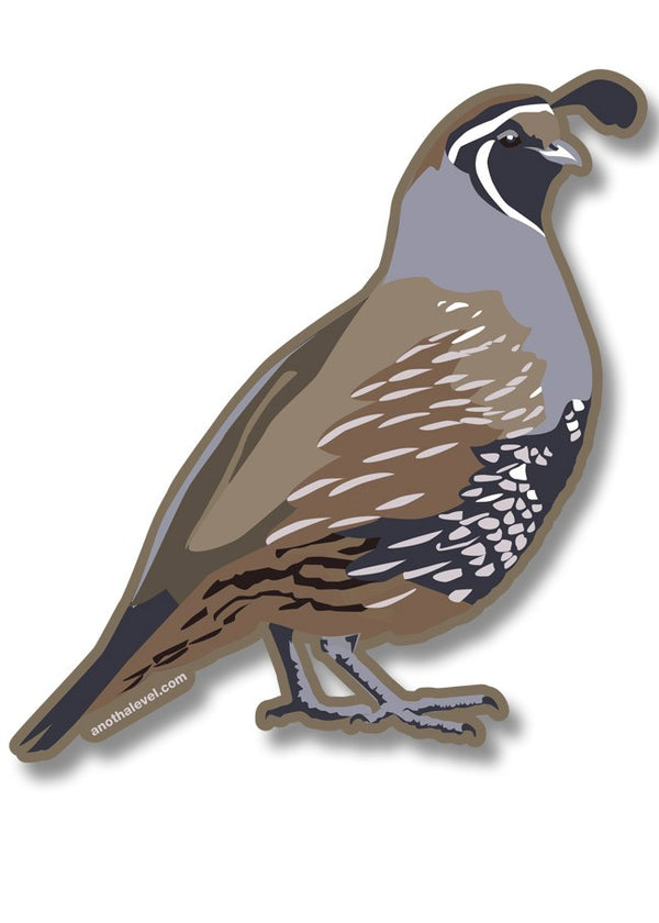 California Quail Decal