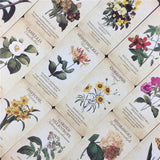 Botanical Inspiration Cards