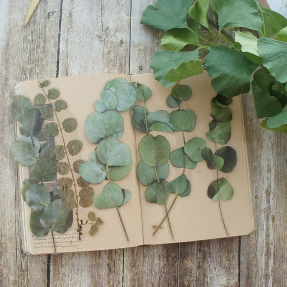 6pcs Eucalyptus Leaves PVC Transparent Stickers | Scrapbooking DIY Craft