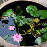 Six Colourful Artificial Floating Lotus Lilly Flowers | Pool Decoration Photoshoot Prop