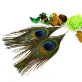 Boho Charming Simple Peacock Feather Earrings