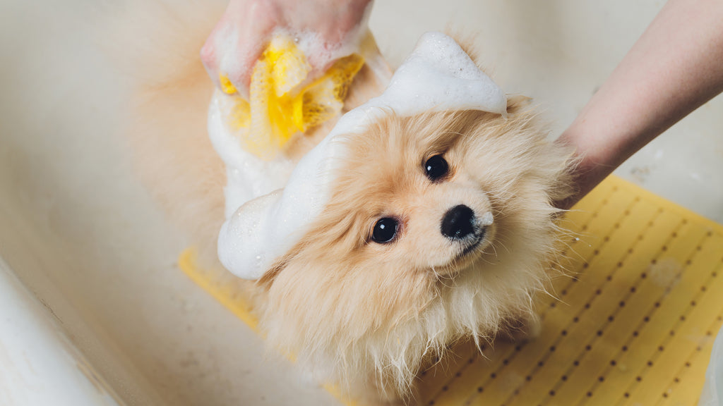 Buy Dogs Shampoos Online In India