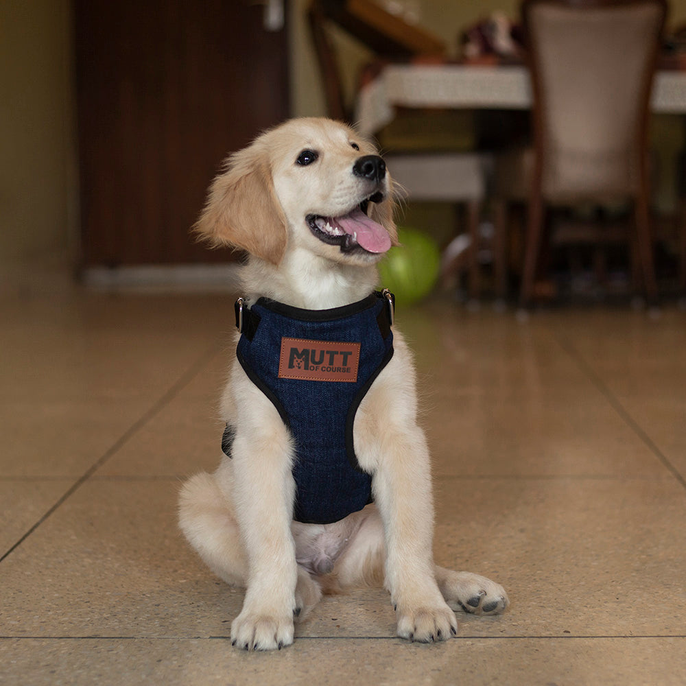 Dark Denim Harness