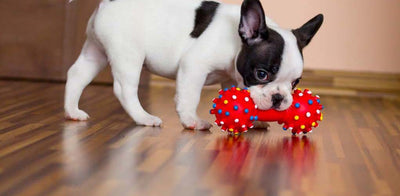 This is Why Your Dog Likes Squeaky Toys