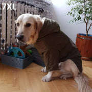 Dog wearing winter jacket for dogs