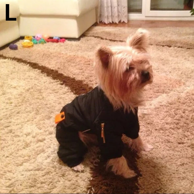Yorkie wearing warm stylish waterproof jumpsuit for dogs