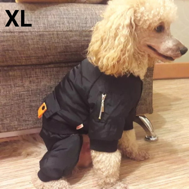 Poodle wearing warm waterproof jacket for dogs
