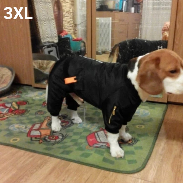 Beagle wearing warm stylish waterproof jumpsuit for dogs