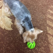 dog playing with green teeth cleaning chew ball holding food