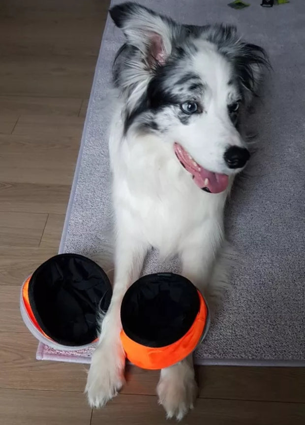 dog with paws on foldable food and water travel bowl for dogs
