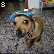 dog wearing stripe summer hat