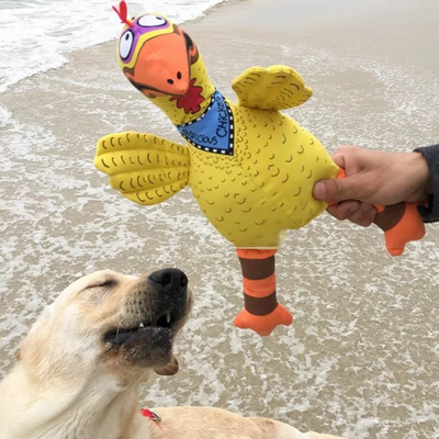 Labrador dog happy playing with squeaky yellow big chicken dog toy