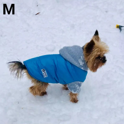 Yorkie wearing winter jacket with hood for small dog