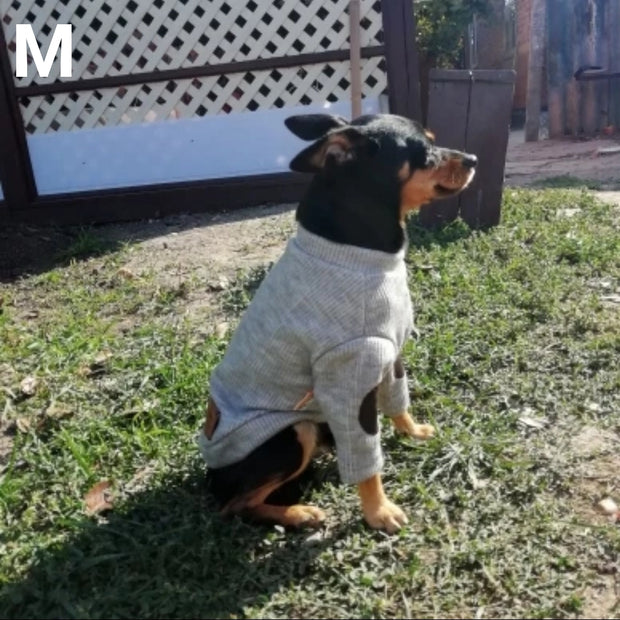 dog wearing cute spring coat for dogs