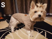 yorkie in beige class wool sweater for dogs