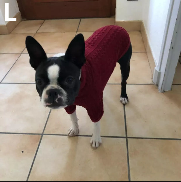 dog in red classic wool sweater for dogs