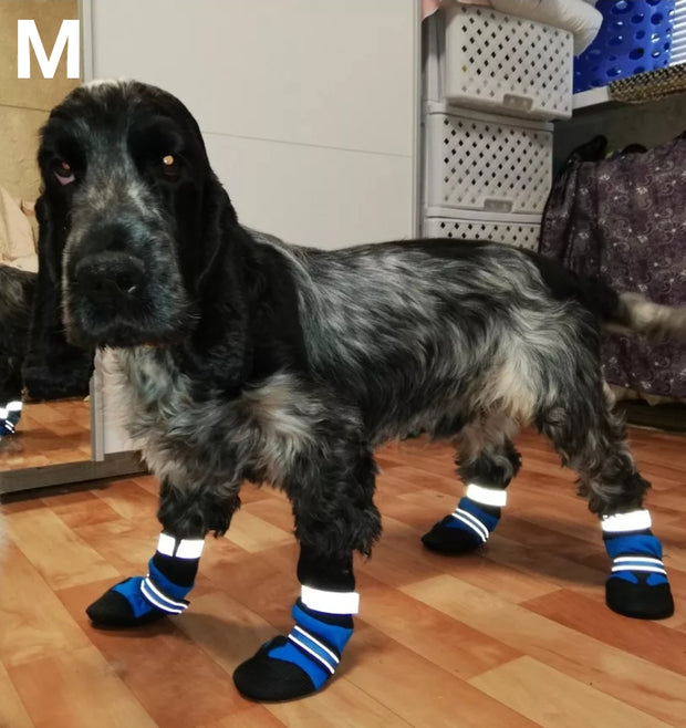 dog wearing blue waterproof shoes