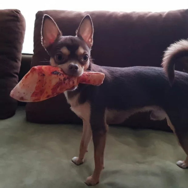 chihuahua with fake chicken leg dog toy in mouth