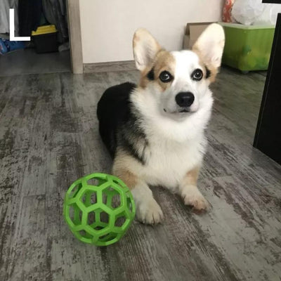 corgi sitting next to big green treat holding ball