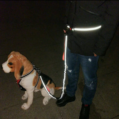 Dog attached to reflective handsfree jogging leash