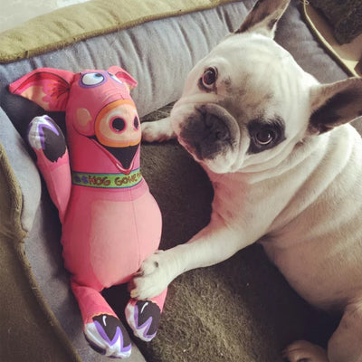 French Bulldog playing with dog toy squeaky big pig plush