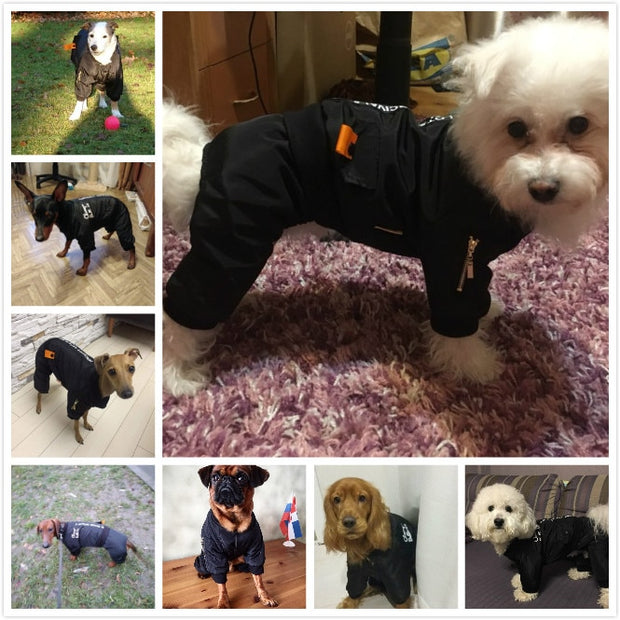 Various images of dogs in warm waterproof stylish jumpsuit