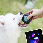 light up dog ball in white samoyeds mouth