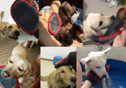 six pictures of dogs interacting with the multi purpose grooming mitt for dogs