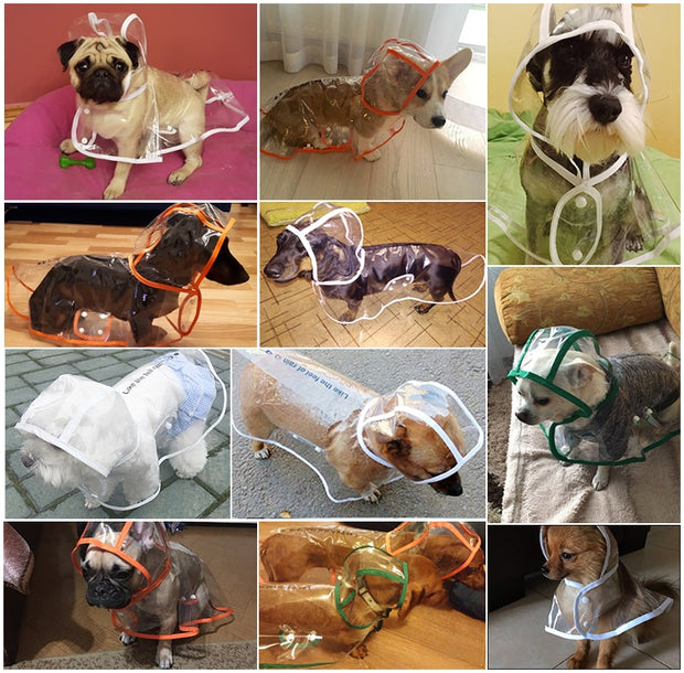 Various images of dogs wearing clear raincoat for dogs