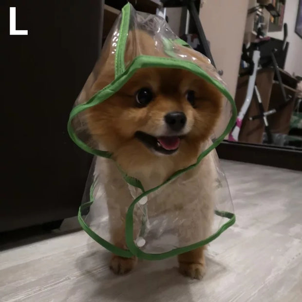 Pomeranian wearing raincoat for dogs