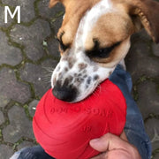 dog chewing on a red rubber dog frisbee a man is holding in his hand