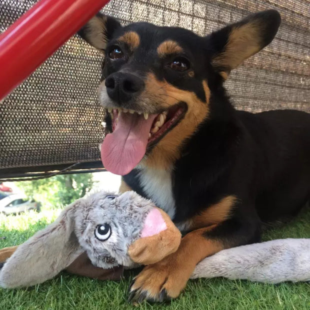 dog chewing on rabbit dog toy with no stuffing