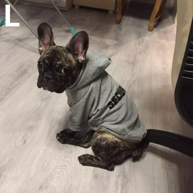 dog wearing grey funny security hoodie