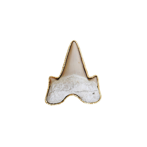 Fossilized Sharktooth Ring