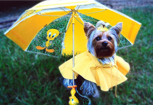 Top 4 Tips for Hurricane Pet Safety