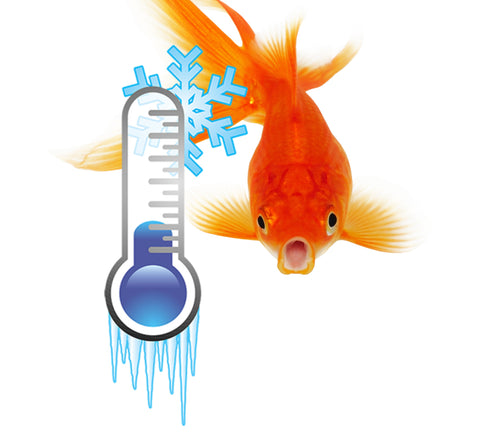 Fish looking at Cold Thermometer