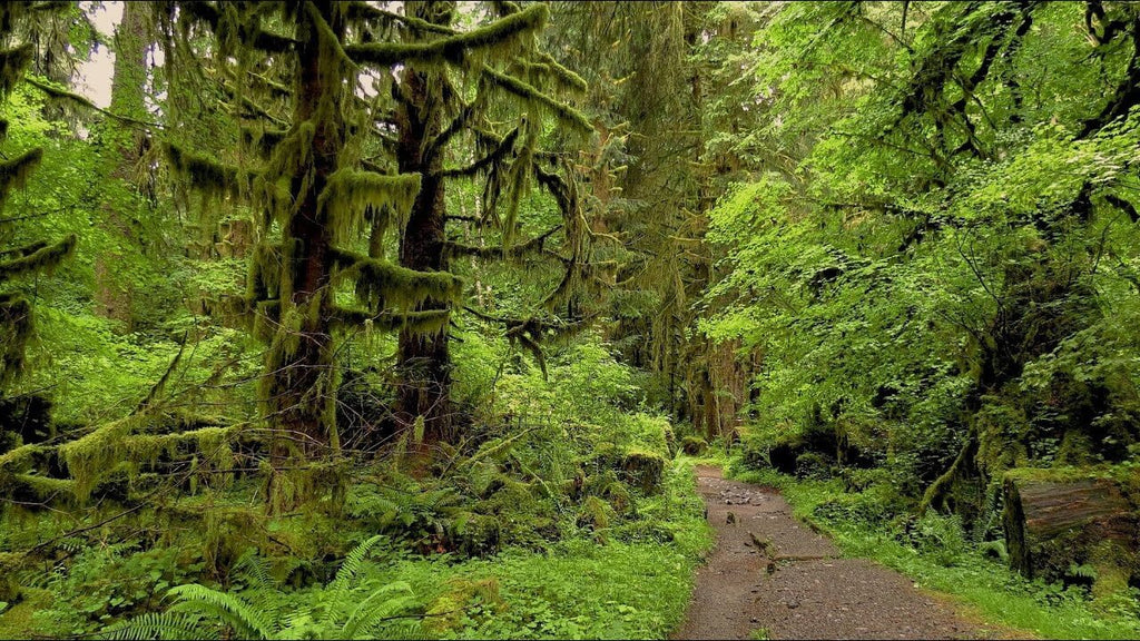 Hoh National Rainforest | VITAE Glass