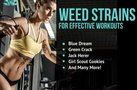 Weed Strains for Workouts | VITAE Glass