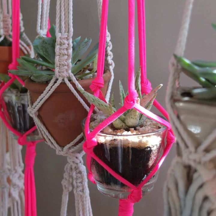 Plant Hanger Workshop: May 30, 2020 at 12:00PM