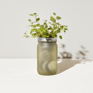 Grow Kit: Oregano, Garden Jar