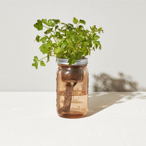 Grow Kit: Parsley, Garden Jar