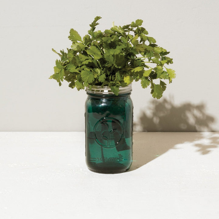 Grow Kit: Cilantro, Garden Jar