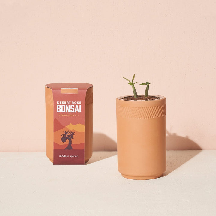 Grow Kit: Desert Rose Bonsai, Terracotta